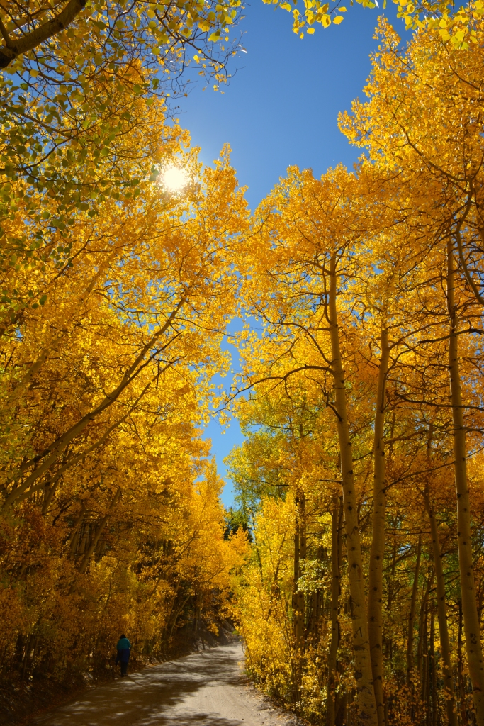aspens on road 2